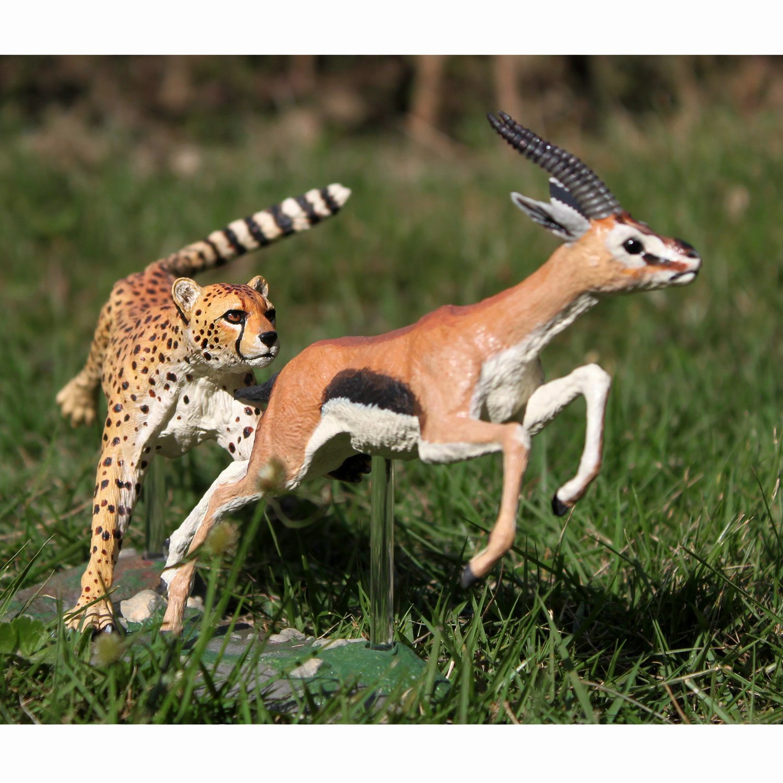 猎豹捕瞪羚羊